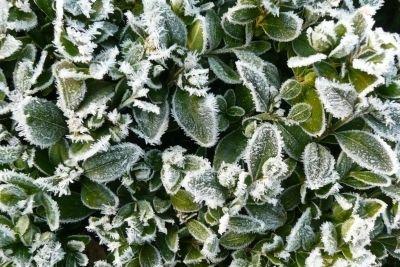 Buchsbäume sind winterharte Pflanzen im Außenbereich