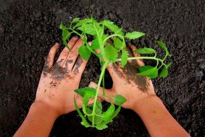 Gesunde Pflanzen verlangen gesunden Boden.