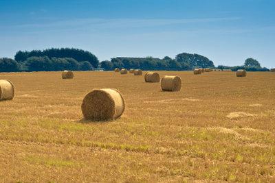 Feldgrößen werden meistens in Hektar angegeben.