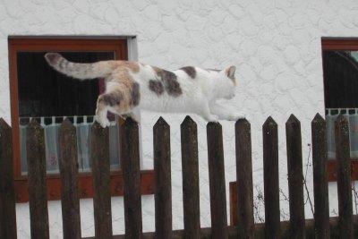 Auf dem Zaun ist das Licht leicht eingeschaltet