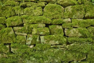 Vermooste Natursteinwand