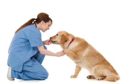 Der Tierarzt diagnostiziert die Blasenentzündung.