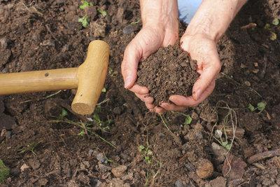 Wer Rasenerde selber mischt, tut seinem Garten etwas Gutes.