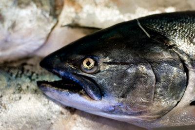 Seefisch kann den Knorpelaufbau unterstützen.