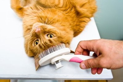 Katzen können auch Flöhe bekommen.