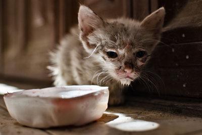 Kranke Katzen verweigern ihr Futter.