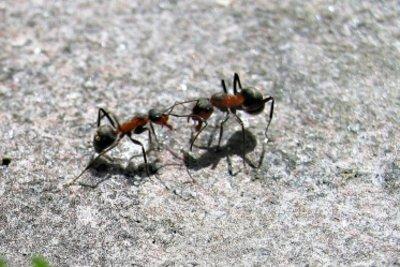 Basteln Sie ein Ameisenkostüm.