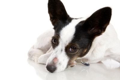Ausschlag beim Hund hat viele Ursachen.