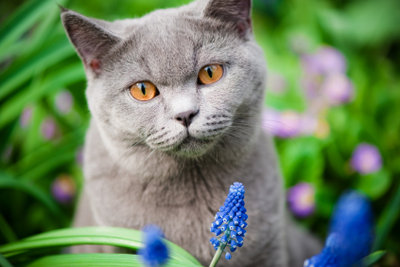 Fremde Katze im Freien.