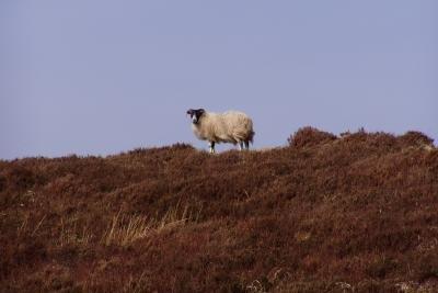 Zu Besuch in den schottischen Highlands.