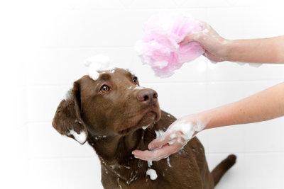 Ein Bad für den Hund