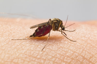 Gehen Sie mit natürlichen Mitteln  gegen Stechmücken vor.