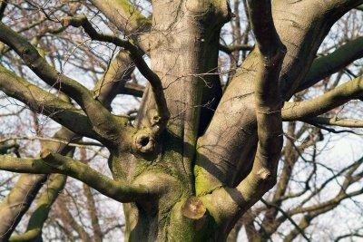 Baumdiagramme ähneln Verästelungen eines Baumes.