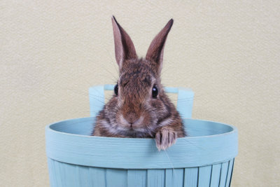 Ein neugieriger Hase