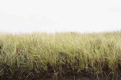 Mit gut gekeimten Samen entsteht leicht solch eine schöne Rasenfläche.