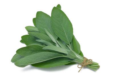 Salbei ist das bekannteste Hausmittel gegen Hyperhidrose und wirkt auch bei Schwitzen am Po.