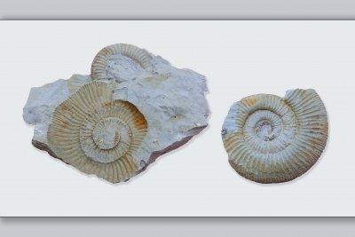 Die Paläontologie findet Spuren der Vergangenheit.