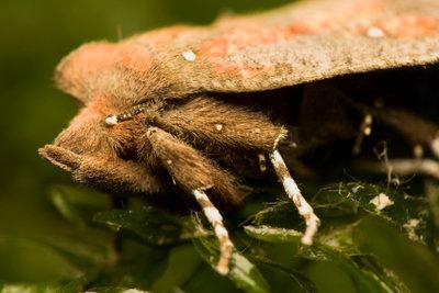 Einige Insekten können sehr groß werden.