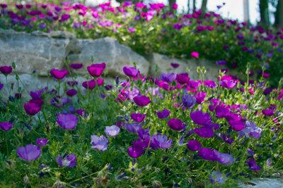 Ein schöner Garten - Schädlingsbekämpfung gehört dazu.