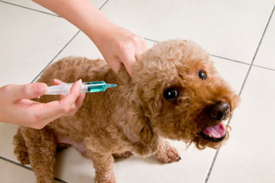 Der Hund bei der Impfung
