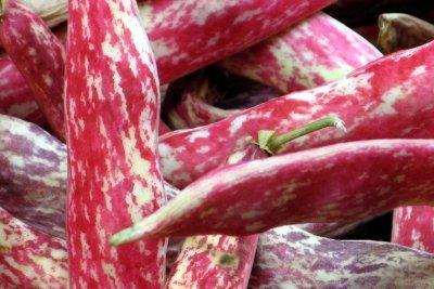 Die Kerne von Prunkbohnen sind essbar.