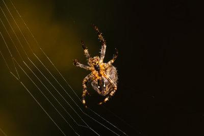 Spinnen hängen gerne in Ihrem Weg.