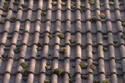 Dachziegel verwittern binnen weniger Jahre.