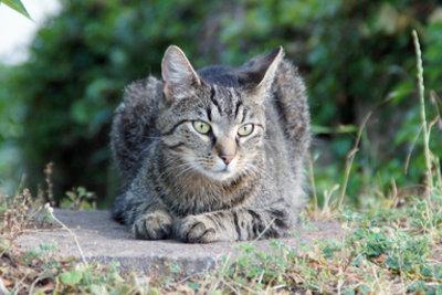 Katzen lieben ausgiebige Streifzüge.