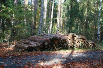 Frisches Holz - hier wachsen Pilze schnell.