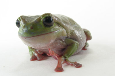 Profil kündigen und keinen Frosch küssen.