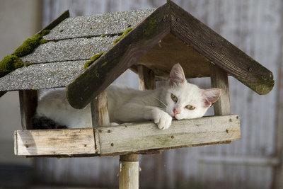 Eher ein Katzenhaus - für Vögel ungeeignet