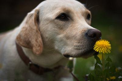 Hunde sind treue Freunde.