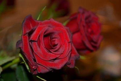 In frischem Wasser halten Rosen länger.
