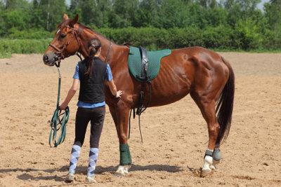 Das größte Glück auf Erden liegt auf dem Rücken von Pferden.