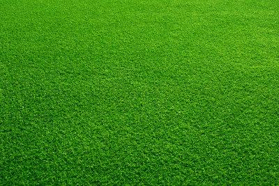 Rasen ausbessern erfordert einiges an Arbeit.
