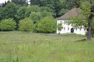 Zecken finden sich oft am Waldrand.