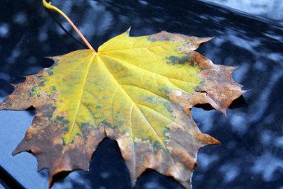 Schöne Blätter schnell trocknen.