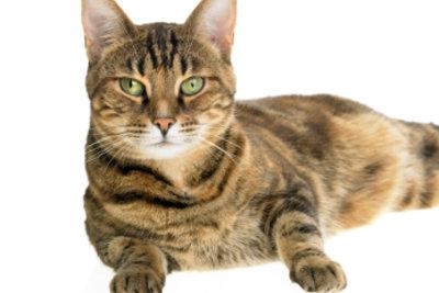 Das gesunde Fell einer Katze