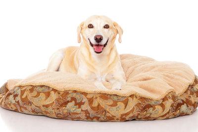 Das eigene Bett für Hunde.