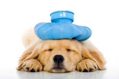 Abkühlung für den Hund