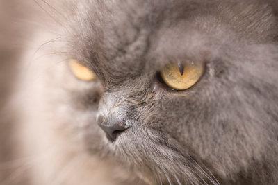 Fellpflege bei Katzen ist wichtig.