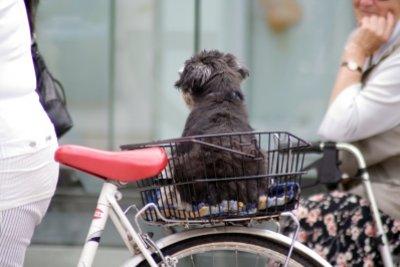 Hunde sollten im Hundekorb gesichert werden.