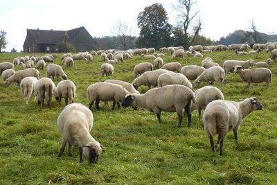 Schafskäse ist besonders würzig.