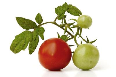 Tomaten sind sehr leicht anzubauen.