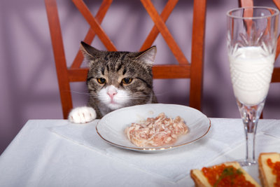Selbst gekochtes Katzenfutter