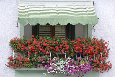 Balkonpflanzen - ein blumiger Sommergruß im Juni