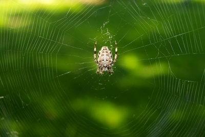 In der Türkei gibt es Spinnen.