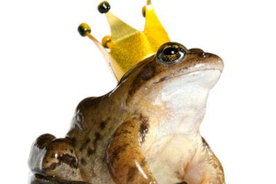 Sprechen Sie über den Froschkönig.