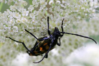 Käferbefall kann unterschiedliche Ursachen haben.