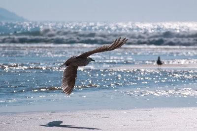 Ein Spaziergang am Strand kostet nichts.